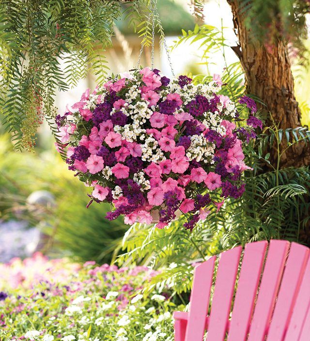 Hanging Baskets 5 Secrets The Pros Use Plants