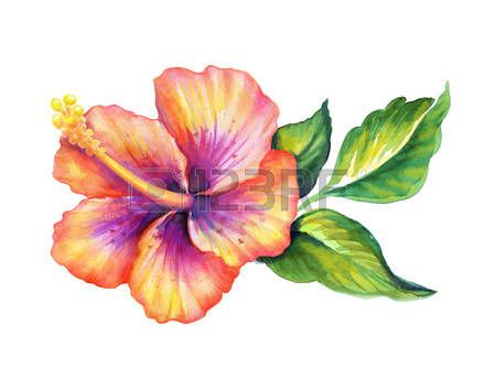 Hibiscus Flowerl Aquarelle Illustration Isol Sur Blanc Watercolor