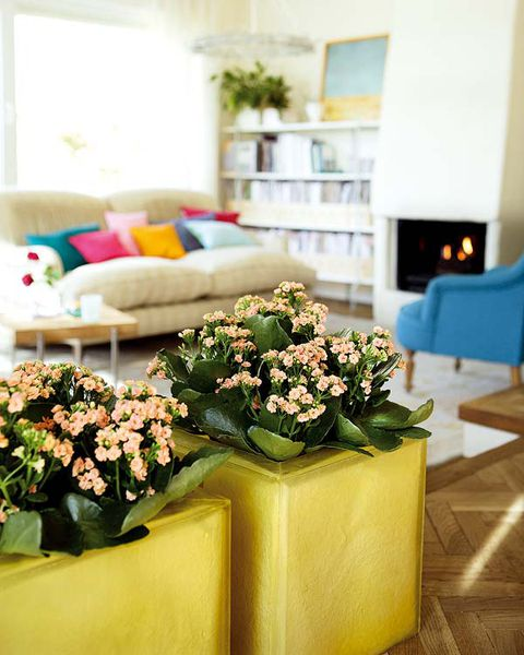 Ideas Para Decorar Con Plantas De