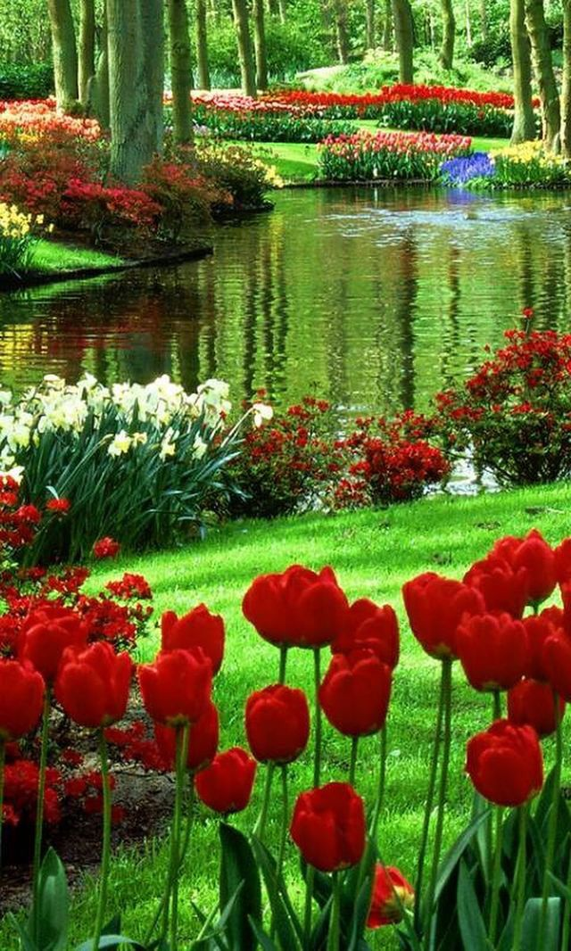 Nature Wallpaper IPhone Fondos De Pantalla Pinterest Paisajes