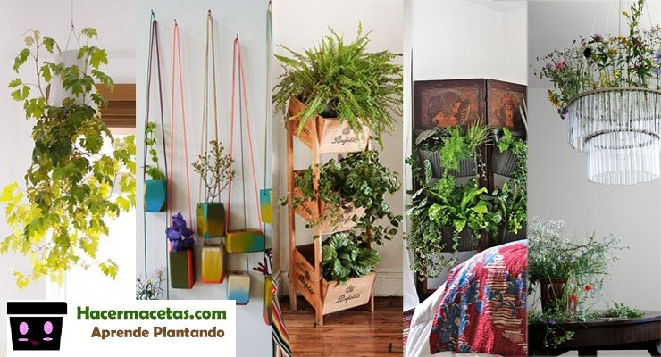 Plantas De Interior Y Las Macetas Mas Ideal Lindas Para Estas