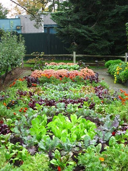 The 90 Best Plants And Gardens Images On Pinterest Gardening