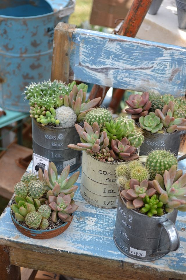 Vintage Kitchen Items Plantas Pinterest Suculentas Cactus Y